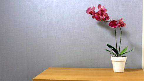 Mídias são indicadas para comunicação visual e decoração de ambientes
